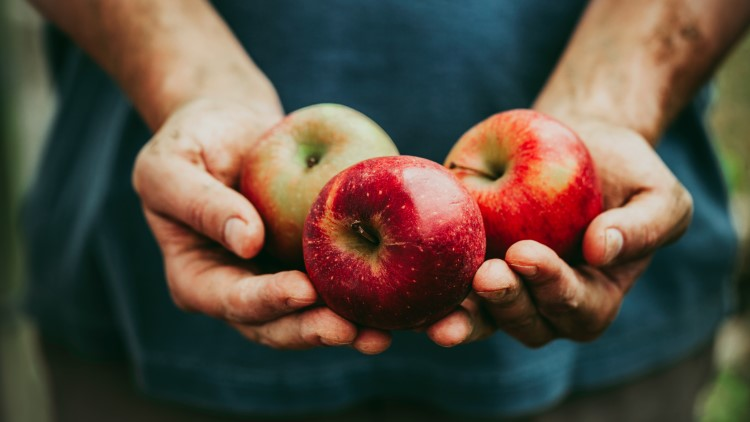 Man holding three apples closeup